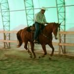 entrainement-chevaux